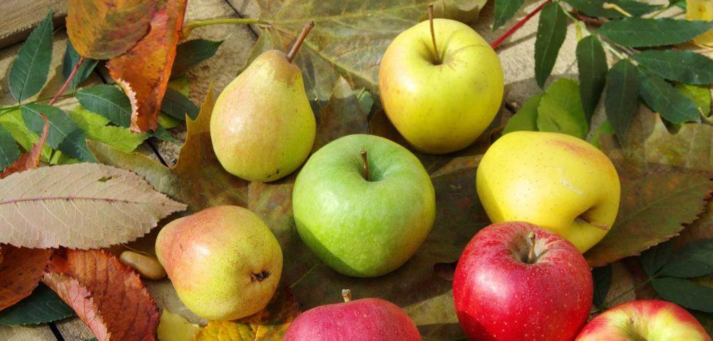 Dégustation : Pommes et Poires - Villeneuve-Loubet - Bio et Sens